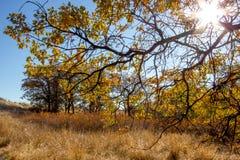 阳光创造金子的强烈的颜色,黄色和橙色在雪山大农场中草和树  免版税图库摄影