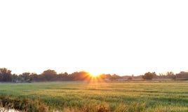 阳光和农场 免版税库存照片