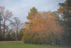 阳光和树荫 库存图片