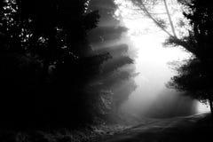 阳光和树 免版税库存照片