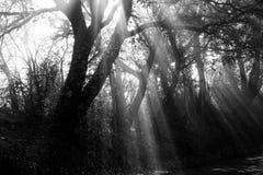 阳光和树 免版税库存图片