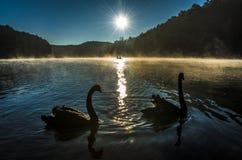 阳光和雾和薄雾 免版税库存照片