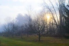 阳光在一个有雾的果树园 图库摄影