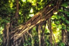 阳光在密林森林里 库存照片