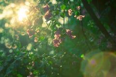 阳光在庭院里 免版税库存照片