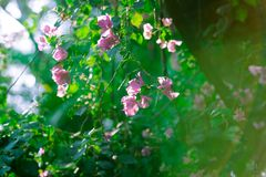 阳光在庭院里 免版税库存图片