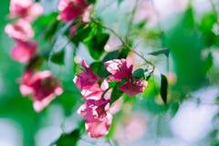 阳光在庭院里 图库摄影