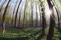 阳光在开花的森林里在春天 免版税库存照片