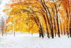 阳光在早期打破树的秋叶冬天 免版税库存图片