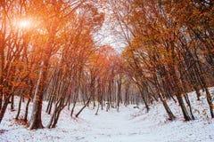 阳光在早期打破树的秋叶冬天 免版税库存照片