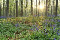 阳光在春天blosoming的森林里 图库摄影