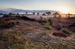 阳光在有薄雾的早晨 库存图片