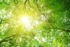 阳光在森林里。 免版税库存照片