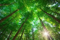 阳光在森林里 图库摄影