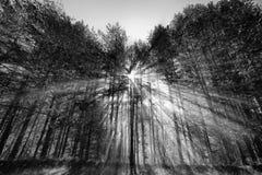 阳光在森林里 免版税库存照片