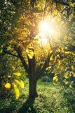 阳光在秋天庭院里 免版税图库摄影