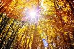 阳光在秋天森林里 免版税库存照片
