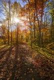 阳光在秋天森林里 免版税库存图片