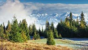 阳光在绿色森林清早 在山的意想不到的雾 10月在早期的冬日 喀尔巴阡山脉 股票视频