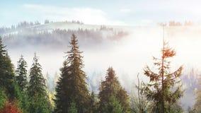 阳光在绿色森林清早 在山的意想不到的雾 10月在早期的冬日 喀尔巴阡山脉 影视素材