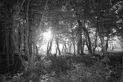 阳光在黑暗的森林里 免版税库存照片