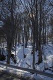 阳光山毛榉或山毛榉森林冬时的在Vitosha山 免版税图库摄影