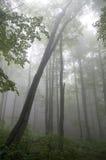 湿森林 免版税库存照片