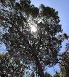 阳光指法通过树 免版税库存照片