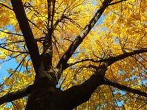 阳光树 库存图片