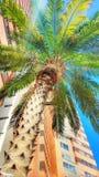 阳光棕榈 免版税图库摄影