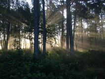 阳光森林 库存图片