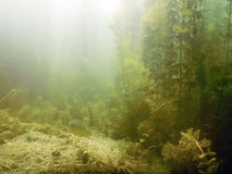 阳光水下的淡水植物群河,湖,池塘 Surfac 库存照片