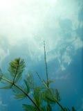 阳光水下的淡水植物群河,湖,池塘 Surfac 免版税图库摄影