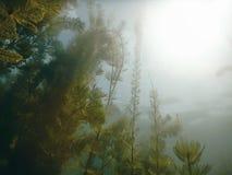 阳光水下的淡水植物群河,湖,池塘 Surfac 免版税库存图片