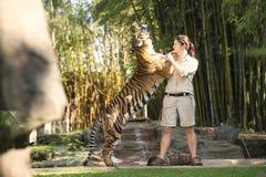 阳光海岸,昆士兰,澳大利亚- 2014年9月17日, :在澳大利亚动物园的大孟加拉老虎在它的化合物里面 图库摄影