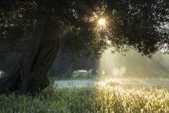 从阳光照亮的草坪 库存照片