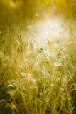 阳光照亮的草甸 图库摄影