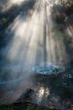 阳光爆炸通过森林在罗托路亚 库存图片