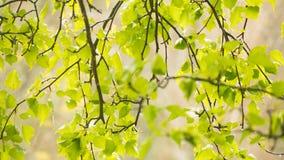 阳光由后照的叶子在一个湿,雨天 免版税图库摄影