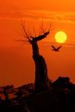 阳光的停止的结构树 库存图片