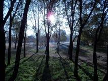 阳光的公园在夏天 图库摄影