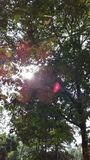 阳光瞥见通过树 库存照片