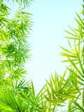 阳光竹子离开框架 免版税图库摄影
