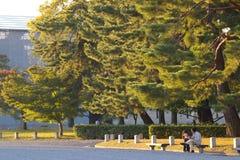 阳光结构树 库存照片
