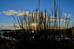 阳光通过在海滩的芦苇 图库摄影