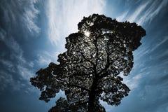 阳光通过大树发光在城市 免版税库存照片