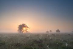 阳光通过树剪影在早晨 免版税库存图片