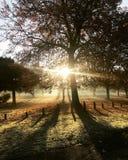 阳光通过树在公园 免版税图库摄影