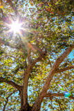 阳光通过树在公园 免版税库存照片