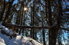 阳光通过树在森林里 免版税库存图片